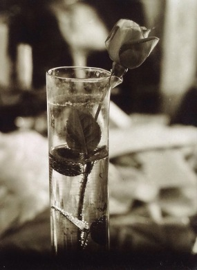 Josef Sudek, Rose in Glass vase, 1950-1954